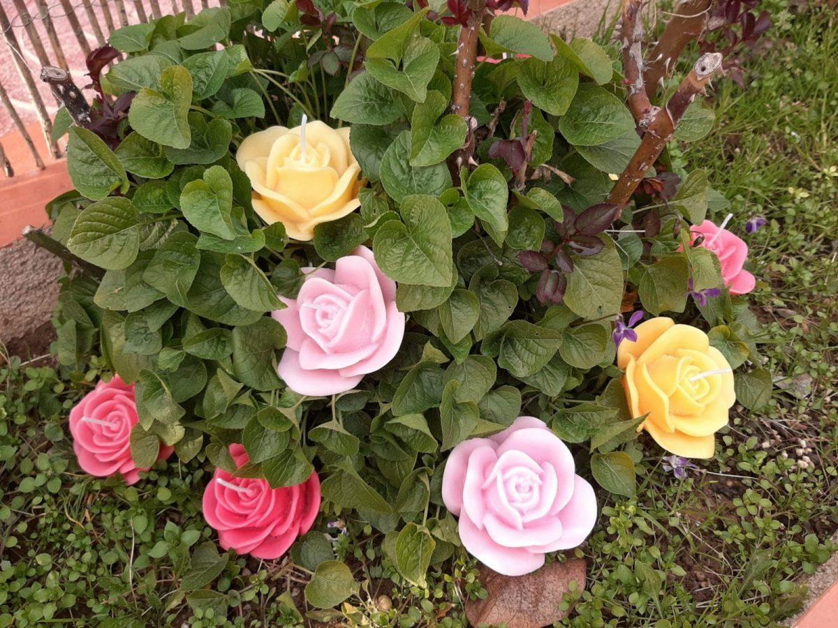 NaturalDreams8 • Vela Flor Rosa